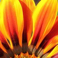 цветок :: Алена Дегтярёва