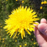 Цветок :: Greatest )))