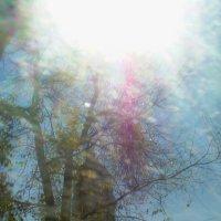 Весна из окна маршрутки :: Дамир Фото73