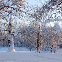Зимняя красота :: Николай Танаев