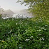 Утро на реке Кихть :: Валерий Талашов