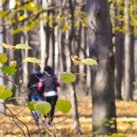 Заблудиться в осени ... :: Ольга Винницкая (Olenka)