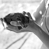 любительница кошек :: Арсений Корицкий