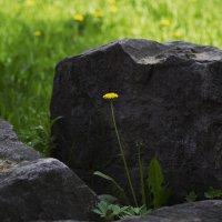 каменный цветок :: Виталий Житков
