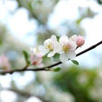 Spring :: Анастасия Томилова