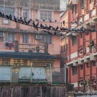 Индия 2014 :: Наталья Терентьева