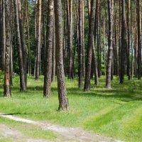 Брянский лес :: Елена Миронова