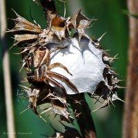 лапы паука... :: Василий Платонов