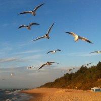 Чайки на Балтике :: Nikita Lev