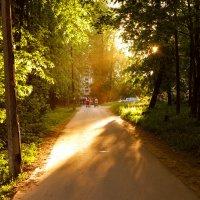 Вечернее солнце :: Андрей Илларионов