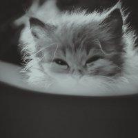 Котик :: Елена Захарова