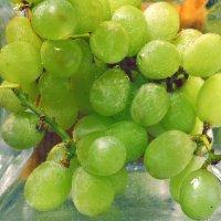 Виноград :: Dasha Darsi