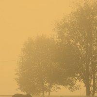 туман :: alex гуриков