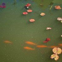 рыбки в бассейне :: Алексей -
