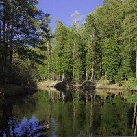 Речка, лес... :: Николай