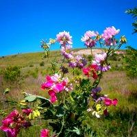 Экспедиция на Буданову гору :: Лариса Коломиец