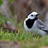 Птаха :: ОЛЬГА КОСТИНА