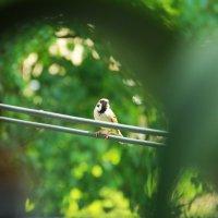 Птица :: Настя Рубан