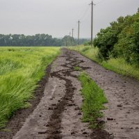 После дождя :: Veronika Mischenko