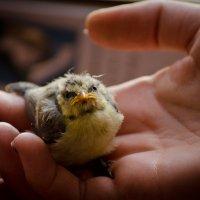 Cпасение маленькой жизни :: Ekaterina Spirina
