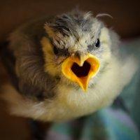 Angry bird :: Ekaterina Spirina