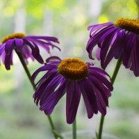 Цветы :: Дарья Селянкина