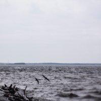 Морская душа 3 :: Елена Череченко