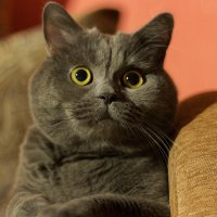 Cat :: Анастасия Кулыгина