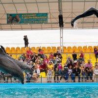 летание с дельфинами :: Вячеслав Липинчук