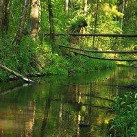 Речка в лесу 2 :: Александр Викторенков