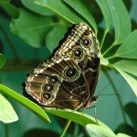 Бабочка :: Сергей Борденов