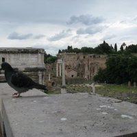 Я коренной житель Рима - хотя и живу на птичьих правах :: Серж Поветкин