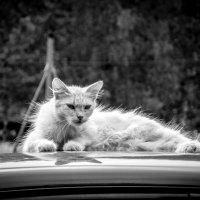 Старый боец! :: Александр Рамус
