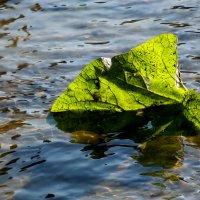 Листок в воде :: Elena N