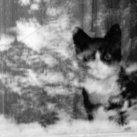 загадочная кошка :: Юлия Быкова