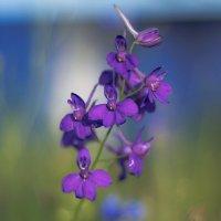 просто цветы :: василий