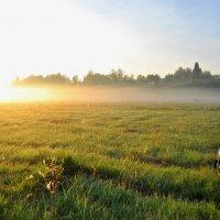 светящийся туман :: vg154