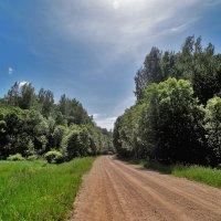 Дорога в лес :: Yuriy V