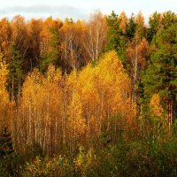 Осенние цвета. :: Анатолий Борисов