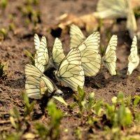 Вылет бабочек :: Julia Miloserdova