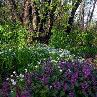 Цветы в лесу.. :: Юрий Стародубцев