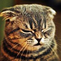 Кіт :: Володимир Цепін