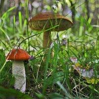 грибы :: андрей жильцов