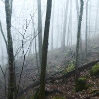в горах немного облачно :: Владимир Потапов