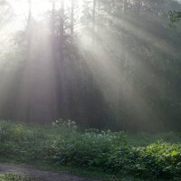 Утренний свет :: Юрий Цыплятников