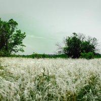 Да степной ковыль... :: Дмитрий Тарарин