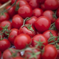 Кубанские помидоры :: Татьяна Чермашенцева(Сhe)