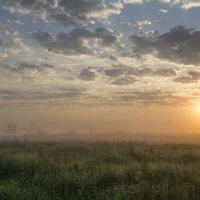 Утро :: Андрей Чиченин