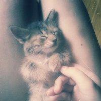 Сладкий сон :: Василиса Керн