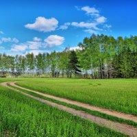 Весеннее поле :: Андрей Куприянов